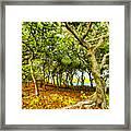 Shady Grove At Wai'anapanapa Framed Print