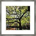 Shady Lane Framed Print