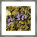 Shale Garden.  Framed Print