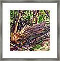 Shattered Pine Framed Print