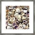 Shells Aplenty Framed Print