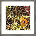 Small Fish In An Aquarium Framed Print