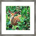 Smiling Fawn Framed Print