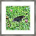 Smoky Mountain Butterfly  Framed Print