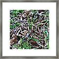 Snipe In Camouflage 2 Framed Print