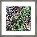 Snipe In Camouflage Framed Print