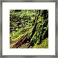 Snoqualmie National Forest Framed Print