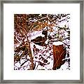 Snow And Tree Trunk Framed Print
