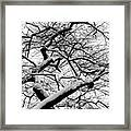 Snow And Trees 2 Framed Print