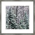 Snow-covered Forest, Wisconsin, Usa Framed Print