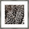 Snow-laden Forest Framed Print