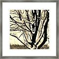 Snow Sitting On Top The Tree Framed Print