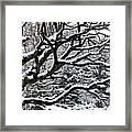 Snowfall And Tree Framed Print