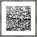 Snowfall On Branches Framed Print