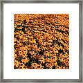 So Many Flowers To Pick From........ Framed Print