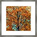 Solitary Fall Framed Print