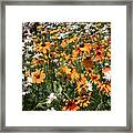 South Lake Tahoe Flowers Framed Print