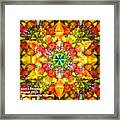Spectracalia In Yellow Catus 1 No. 3 H A Framed Print