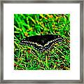 Spicebush Swallow Tail Framed Print