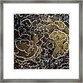 Spirals In Corals Framed Print