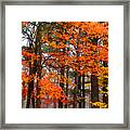 Splashes Of Autumn Framed Print