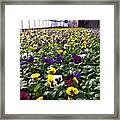 Splashes Of Color Framed Print