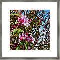 Spring Apple Blossoms- Spring Flowers Framed Print