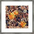 Spring Crocus Flower Framed Print