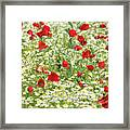 Spring Meadow With Poppy And Chamomile Flowers Framed Print