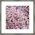 Spring Trees Art Prints Pink Springtime Blossoms Baslee Troutman Framed Print