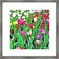 Spring Tulips Flower Field I Framed Print