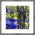 Spring Woodland  Framed Print