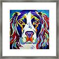 Springer Spaniel - Cassie Framed Print by Alicia VanNoy Call