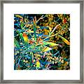 Spring's Joy Framed Print