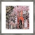Springtime In Lincoln Park Framed Print