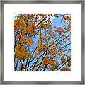 Sprinkles Of Autumn Framed Print