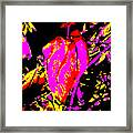Sprite Framed Print by Eikoni Images