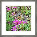 Squirrel Among Coreopsis In Huntington Gardens In San Marino-california   Framed Print