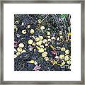 Squirrel Cache In Compost Pile Framed Print