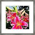 Stargazer Lilies #2 Framed Print
