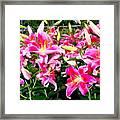 Stargazer Lilies #5 Framed Print
