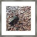 Stone And Leaves Framed Print