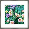 Strawberry Candy And Yarrow Framed Print