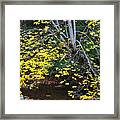 Sugar Maple Birch River Mirror Image Framed Print