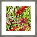 Sumac On White Pine Trail In Kent County, Michigan  Framed Print