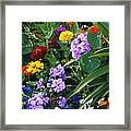 Summer Garden 3 Framed Print