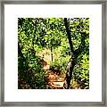 Summer Trail  Framed Print