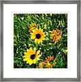 Summer Wildflower Dreams Framed Print