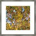 Summertime Tree Framed Print