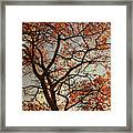 Summing Nature Call  Framed Print